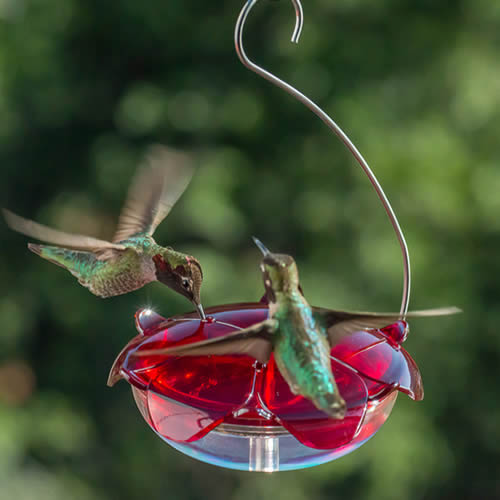 Droll Yankees Ruby Sipper Hanging Feeder