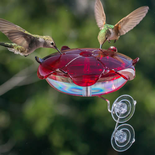 Droll Yankee Ruby Sipper Window Feeder