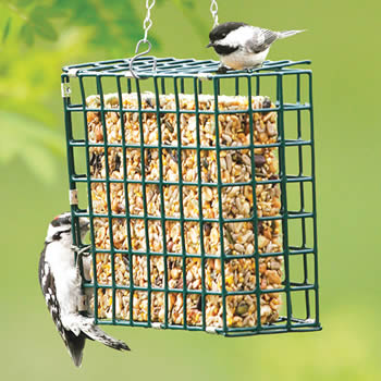 Seed and Suet Cake Cage Feeder