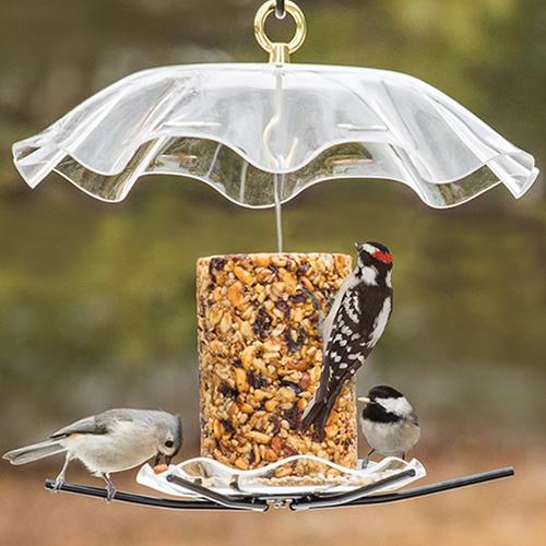 Duncraft Com Birdschoice Seed Cylinder Feeder