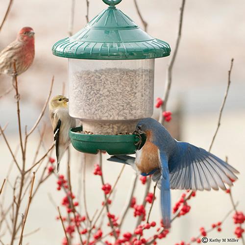 Clingers Only Bird Feeder (SE7012) photo