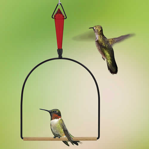 Jeweled Hummingbird Swing