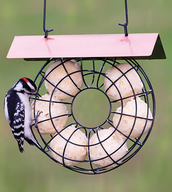Covered ring suet ball feeder for How to make suet balls for bird feeders