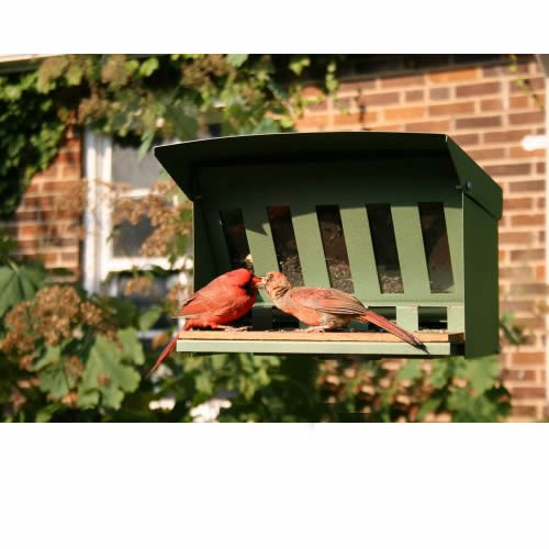 Erva Squirrel Proof Feeder
