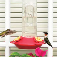 Hummingbird Supplies Hummingbird Window Feeder
