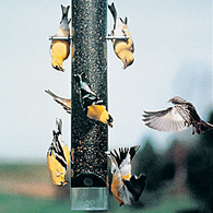 Upside Down Finch Feeder