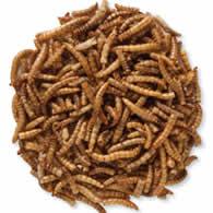 Bits 'N Bites Mealworms