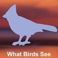 BirdSafe Window Strike Solutions Prevent Bird Window Collisions - Window decals for bird safety