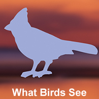 BirdSafe Window Strike Solutions Prevent Bird Window Collisions - Window decals deter birds