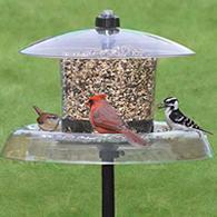 duncraft com droll yankees jagunda squirrel proof bird feeder