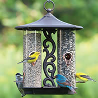 Specific type of feeder for birding