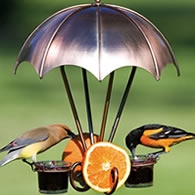 Hummingbird Supplies Shop All Oriole Feeding Supplies