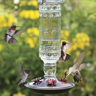 Hummingbird Supplies Antique Hummingbird Feeder