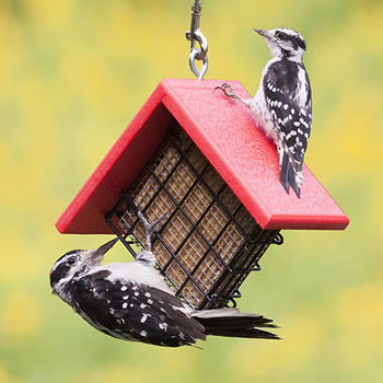 Ultimate Suet Shield Feeder