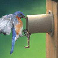 duncraft: screw mount birdhouse guardian