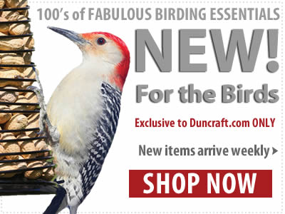 Blog Specials for the Birds Lovers