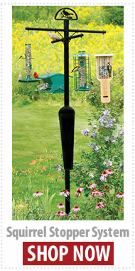 Squirrel Proof Bird Feeder make bird feeding easy, fun and rewarding!