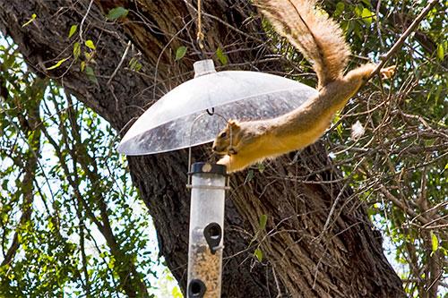 How To Squirrel Proof Your Birdfeeder Duncraft S Wild